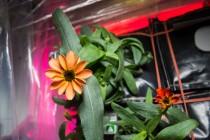 Il primo fiore dello spazio